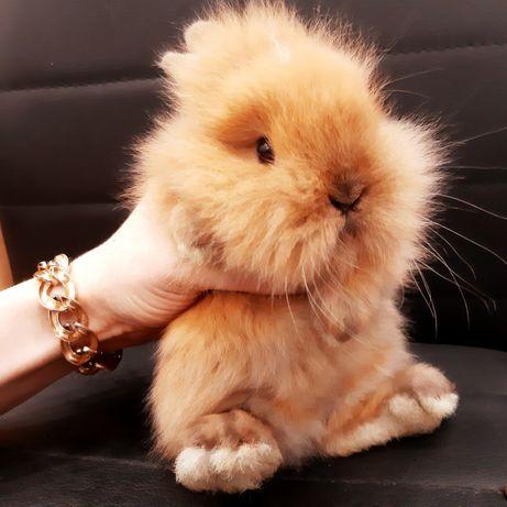 Карликовые миниатюрные декорат. торчеухие и вислоухие кролики и клетки