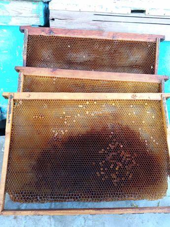 Пчелиная сушь дадан