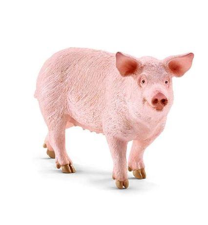Продається велика свиня