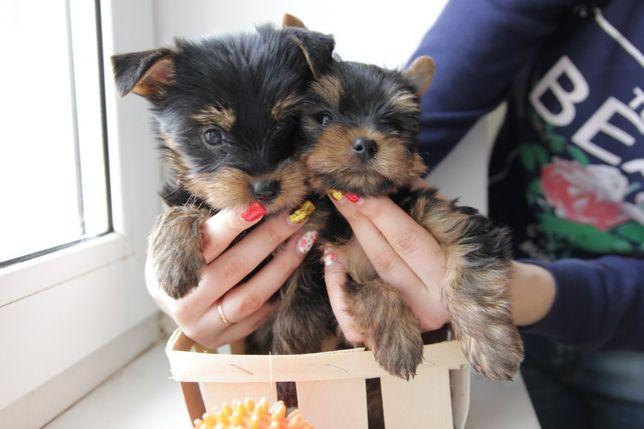 Красивые щеночки