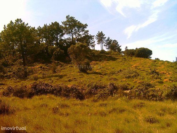 Terreno rústico de dois hectares em Almargem do Bispo