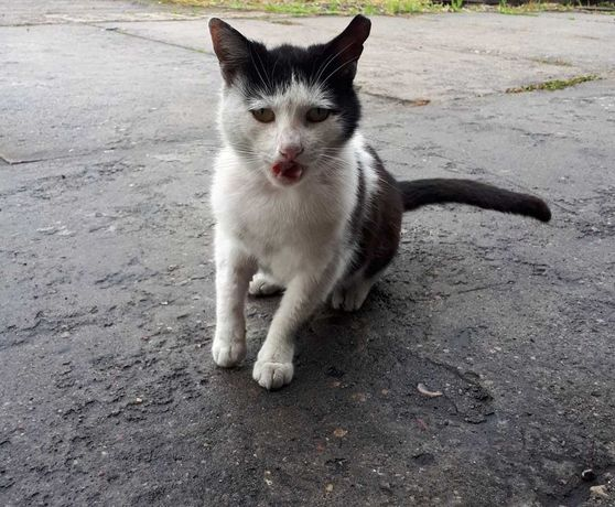 Pan Kot szuka domu