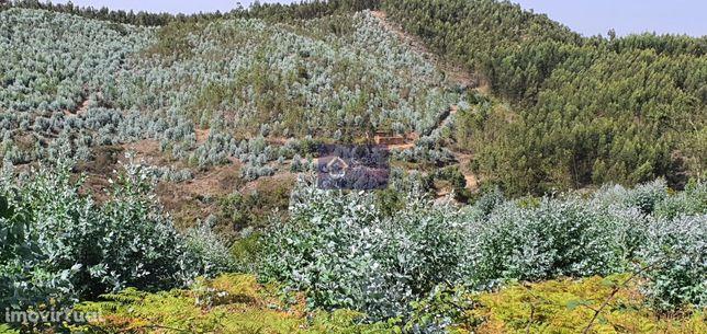 Terreno Misto na Gateira - Monchique para venda com ruína GS17475GCBC