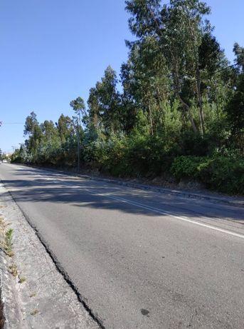 Terreno em eixo, azurva (Zona Urbana), a 7minutos de aveiro.