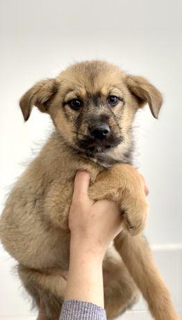 В добрые руеи щенок 2,5 месяца