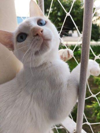 Caju gato para adoção