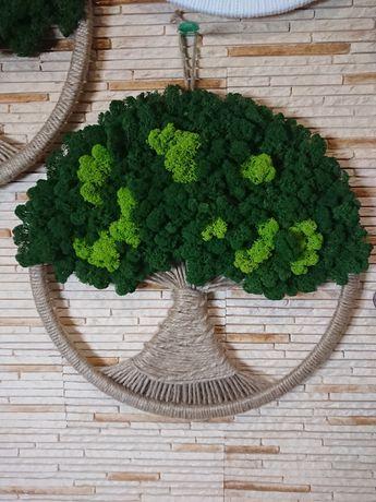 Drzewo drzewko szczęścia życia obręcz 50cm chrobotek