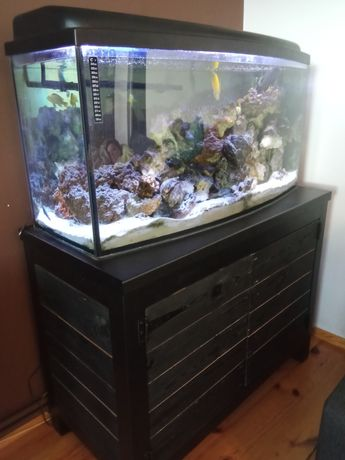 Akwarium pyszczaki malawi 200L