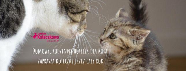 Wizyty domowe u kota/ Hotel dla Kota
