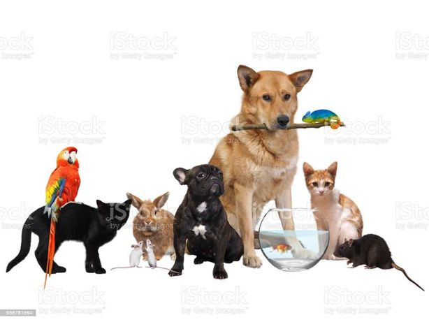 Cuidar dos seus pets