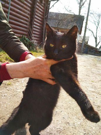 Котик хлопчик - 8 міс