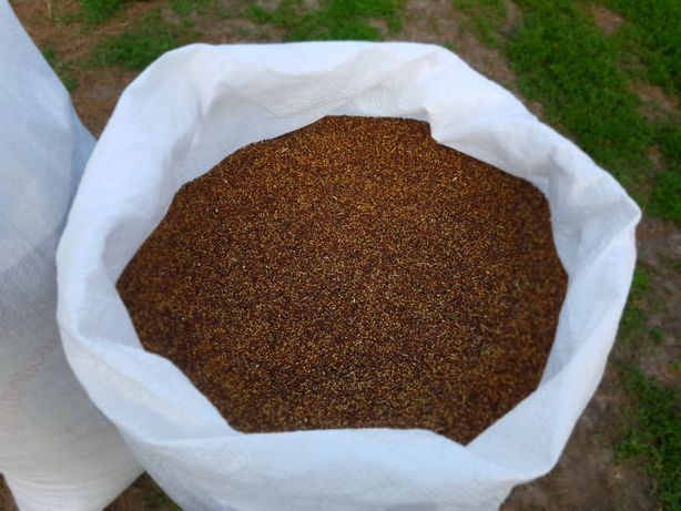Люцерна , семена люцерны