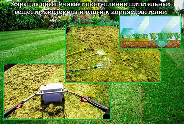 аерація газона