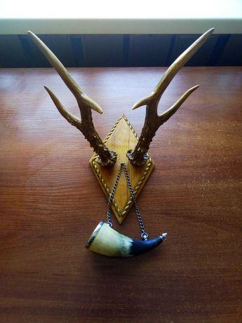 Рога косули трофей охотничий охота
