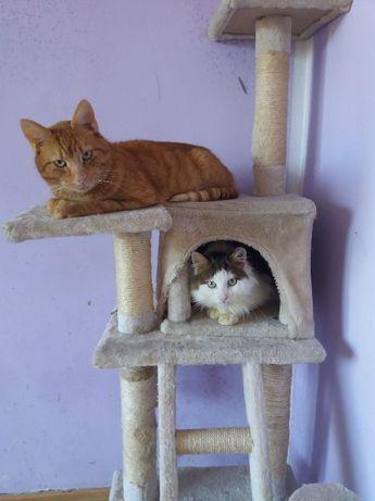 Dwa piękne koty do adopcji! Rudy i długowłosy