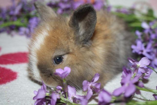 Чудненькие мини крольчата ждут вас
