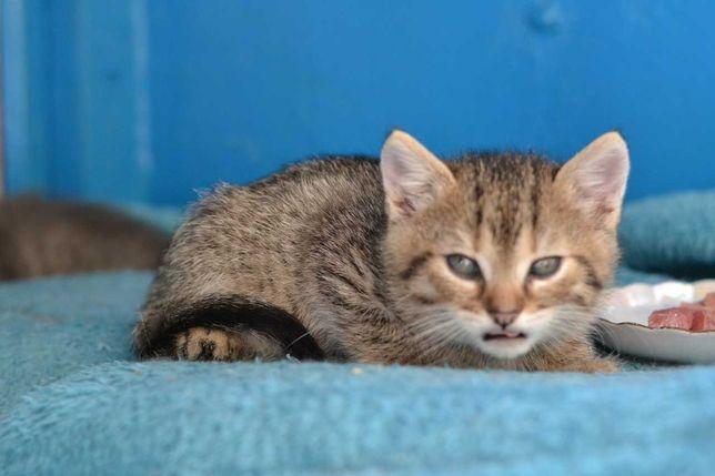 шпротний котичок в пошуках домівки 1,5м