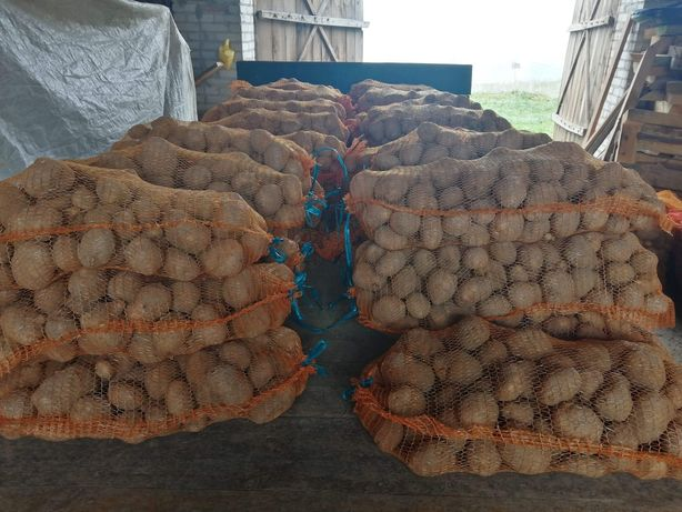 Ziemniaki 0.60 gr za kg.