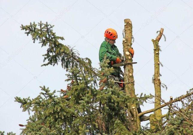 Спил деревьев любой сложности, обрезка веток, порезка дров.