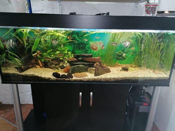 Akwarium 375l z szafką, rybami, roślinami i osprzętem