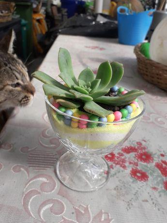 Taça de vidro com planta
