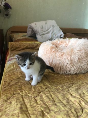 Домашние котята для вас