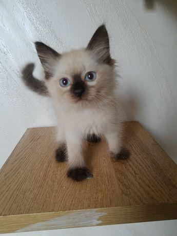 Najpiękniejsze kotki jak w Reklamie