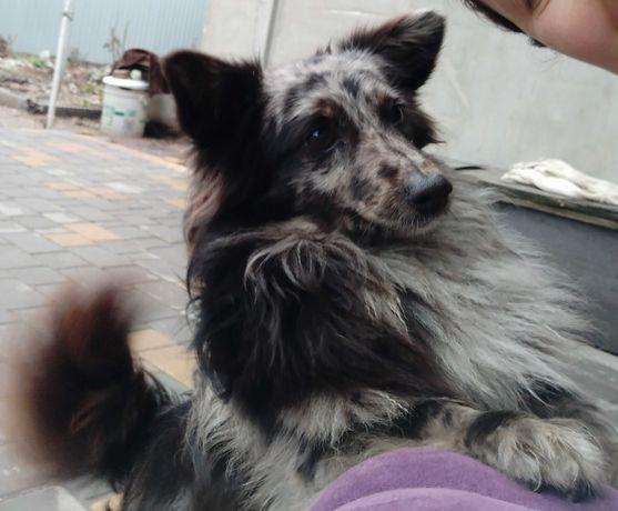 Пропала собака р-н Ленпоселка