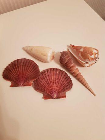 Muszle morskie ozdoba do mieszkania muszla