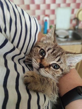 Малюк Васька, ніжний хлопчик кошеня, кіт, котик
