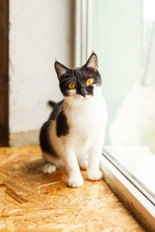 Котенок Фанта ищет дом котенок котята кошеня кот кошка котеня кошеня
