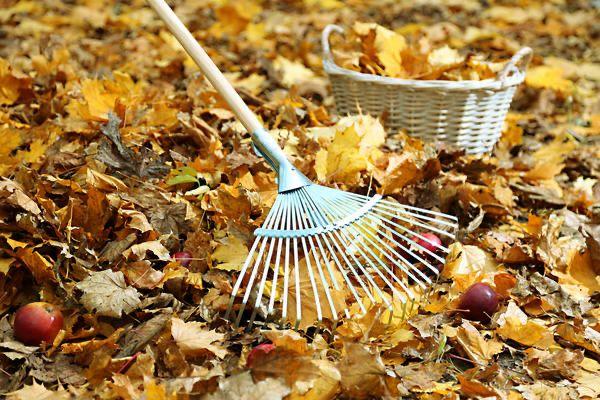 Уборка участков, чистка садов