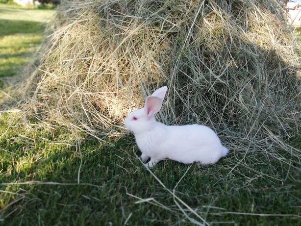 Tuszki królicze  ekologiczne 35zł - szt