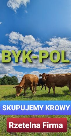 SKUP BYDŁA - krowy