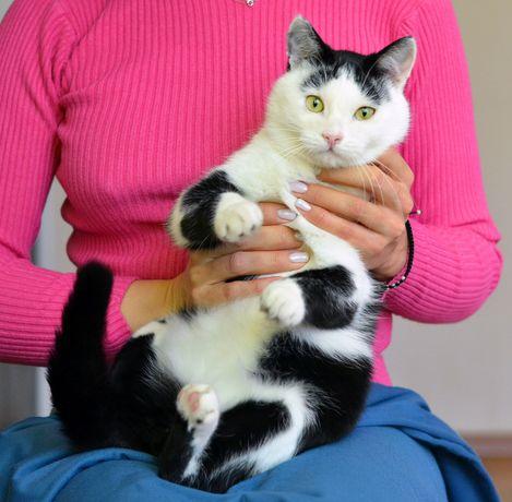 Славный малыш, котик Капитан, 10 мес., кот в добрые ручки.Кастрирован
