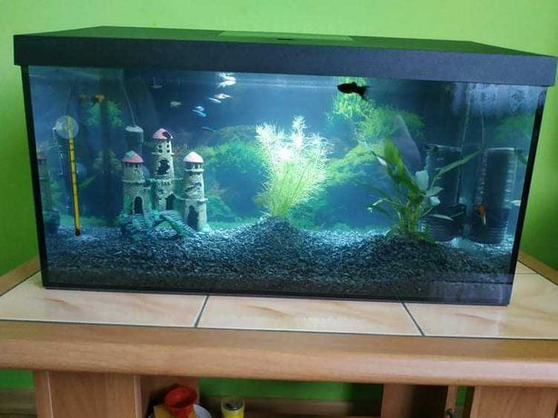 Akwarium 60l z wyposazeniem