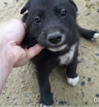 Отдам даром в добрые руки щенков
