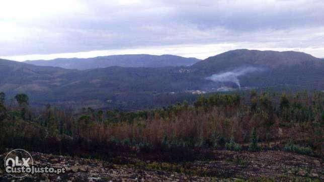 Coutada de Monte para plantações florestais - 16000 m2