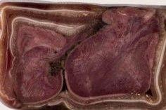 Ozorki w uchu-rolada-Litewskie przysmaki