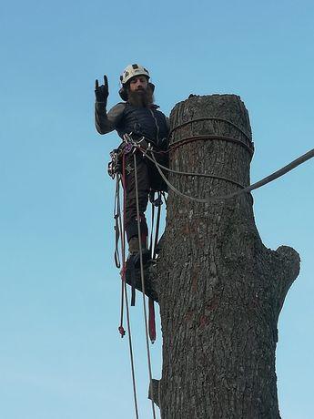 Wycinka oraz pielęgnacja drzew