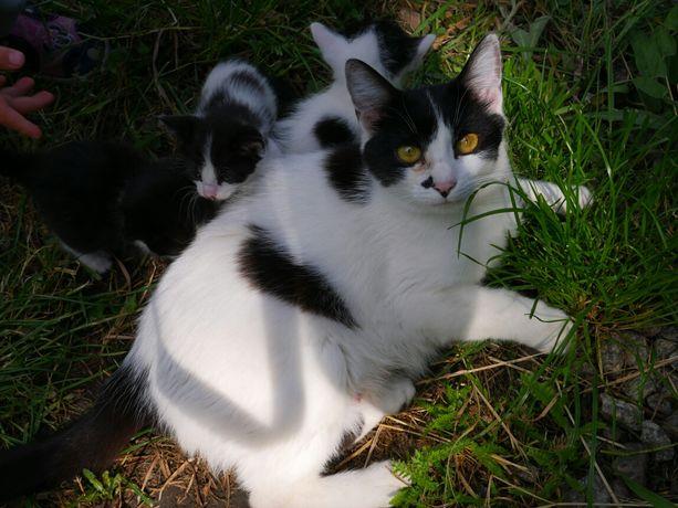 Кошечка девочка