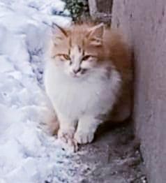 Коты ищут дома
