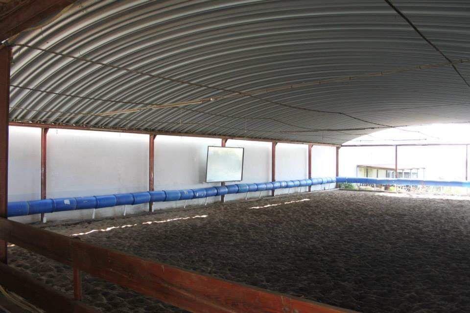 Cavalos a penso Fazendas de Almeirim - imagem 1