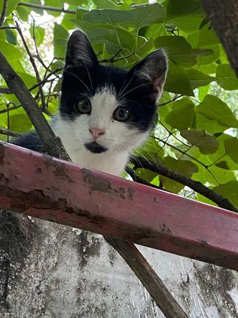 Котик - Бетмен, в гарні руки