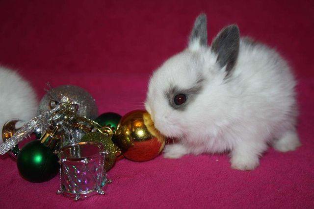 Забавные крольчата для вас