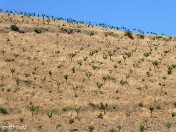110ha terra c/ amendoal, sobreiros, cultivo. Portugal, Guarda, Pinhel.