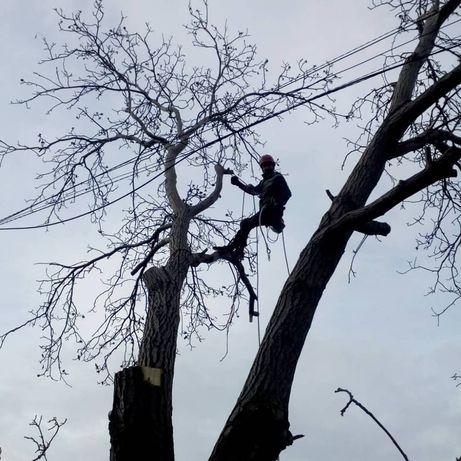 Аккуратный спил деревьев