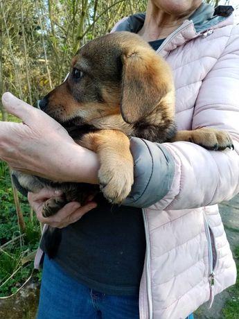 Śliczne szczeniaki do pilnej adopcji Fundacja psi azyl,