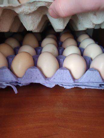 Яйця курячі домашні