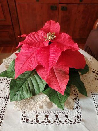 Kwiaty gwiazda betlejemska hand made święta Boże Narodzenie